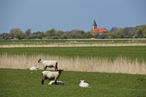 Die Eiderstedter Kirchenlandschaft - direkt am Weltnaturerbe Wattenmeer gelegen - ist bundesweit einzigartig